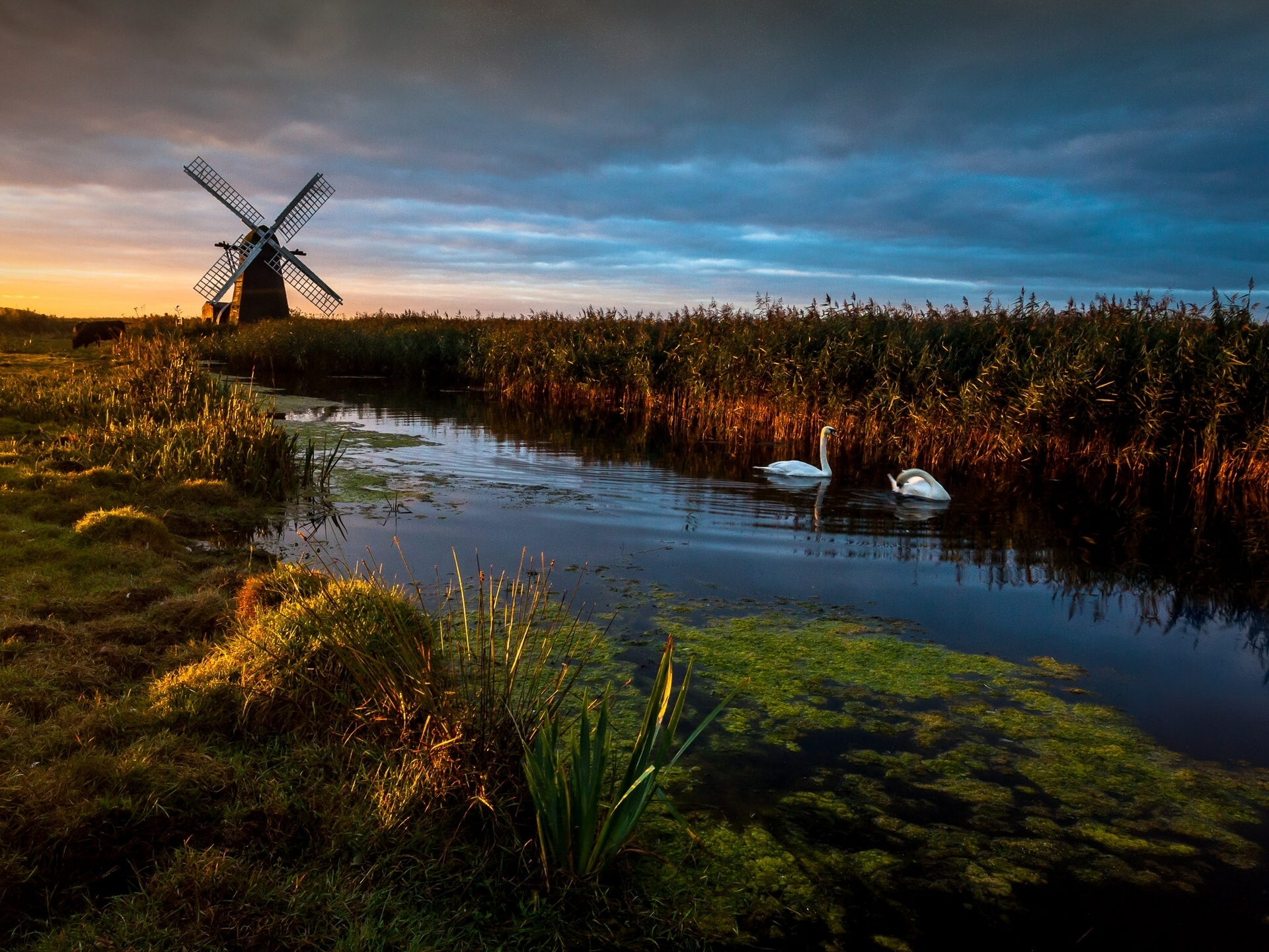 England_mill_swans_river_reeds_1920x1441