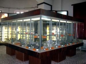 Muzeul_Geologic_Bucuresti2
