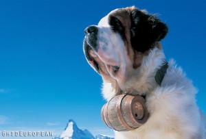 St_Bernard_Dog_with_Matterhorn_Switzerland_skiing_holidays_1152x864