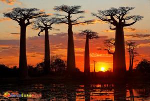 Madagascar (11)