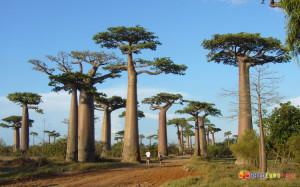 Madagascar (3)