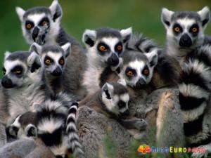 Madagascar (7)