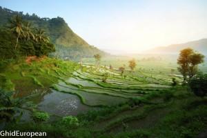 Bali_foto mici (8 of 14)