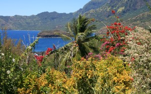 Végétation au bord de la route d'Atuona à Puamau, ile de Hiva Oa, archipel des Marquises, Polynésie Française. Vue sur la baie des Traitres et le rocher Hanakee.