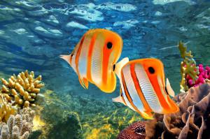 Australia Marea Bariera de corali (2)