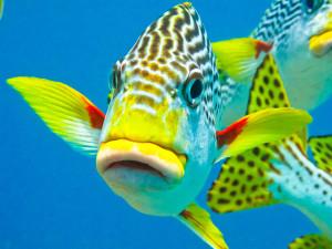 Australia Marea Bariera de corali (5)