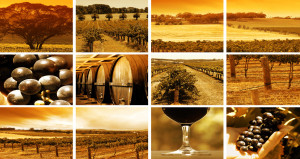 wine-montage
