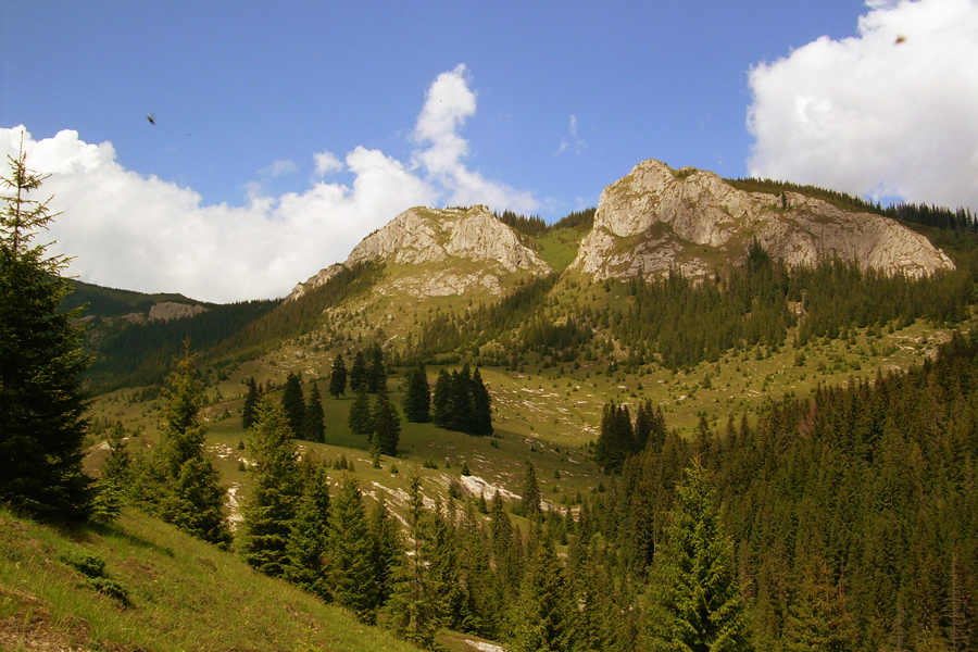 Parcul Național Defileul Jiului.doc (1)