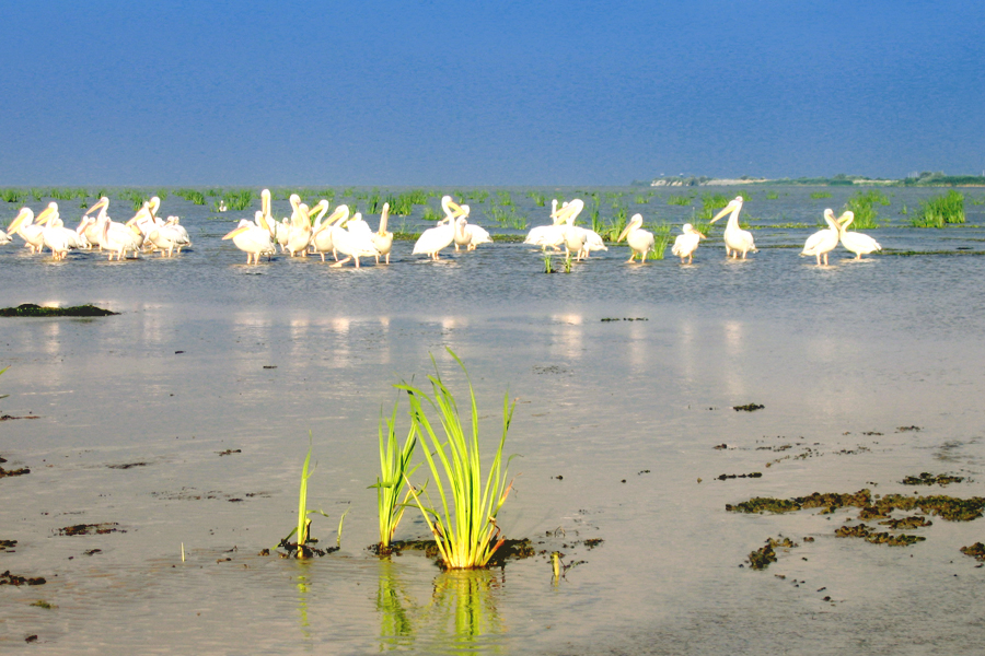 Parcul National Delta Dunarii (14)