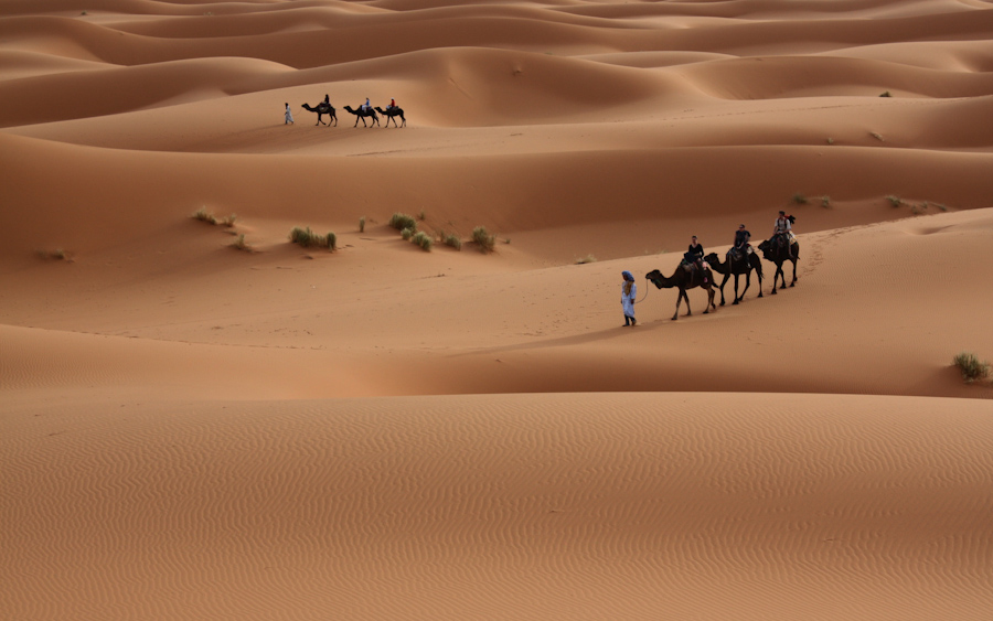 nature_landscapes_desert_dune_sand_people_travel_photography_plants_1920x1200