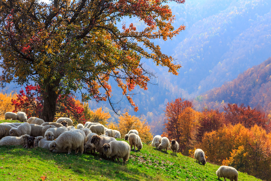 Autumn landscape in the Romanian Carpathians02_canstockphoto21992457