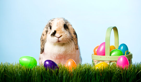 easter-bunny-ser